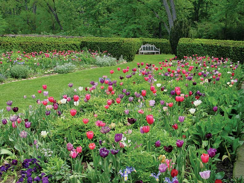 dumbarton-oaks-garden-tulips - National Organization of Italian ...